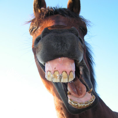 Funny Faced Horse